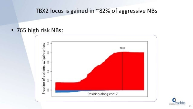 TBX2 locus is gained in ~82% of aggressive NBs • 765 high risk NBs: 41 Position along chr17 Fractionofpatientsw/gainorloss