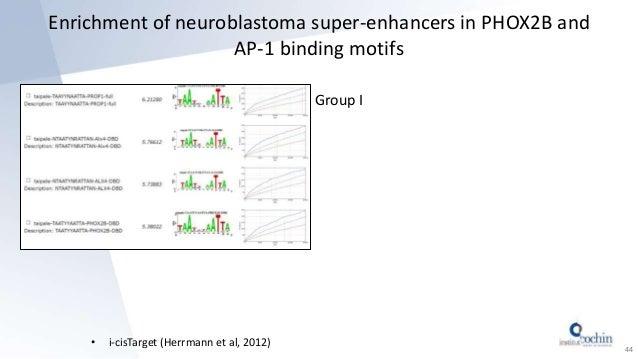 Enrichment of neuroblastoma super-enhancers in PHOX2B and AP-1 binding motifs • i-cisTarget (Herrmann et al, 2012) 44 Grou...