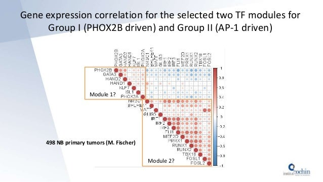 498 NB primary tumors (M. Fischer) Module 1? Module 2? Gene expression correlation for the selected two TF modules for Gro...