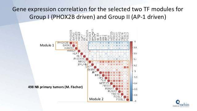 498 NB primary tumors (M. Fischer) Module 1 Module 2 Gene expression correlation for the selected two TF modules for Group...