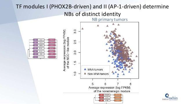 TF modules I (PHOX2B-driven) and II (AP-1-driven) determine NBs of distinct identity NB primary tumors