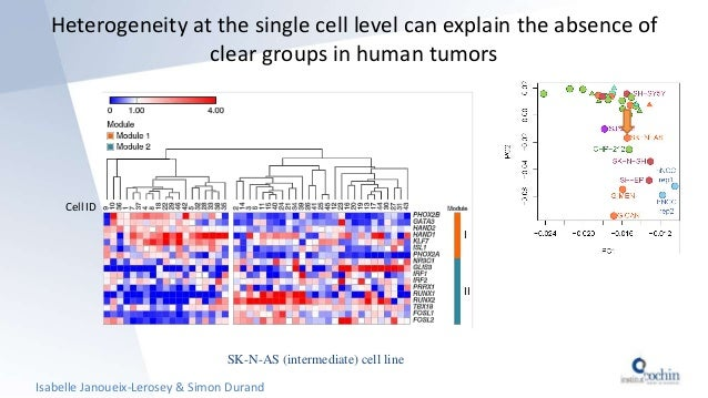 Heterogeneity at the single cell level can explain the absence of clear groups in human tumors SK-N-AS (intermediate) cell...