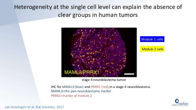 Heterogeneity at the single cell level can explain the absence of clear groups in human tumors van Groningen et al, Nat Ge...