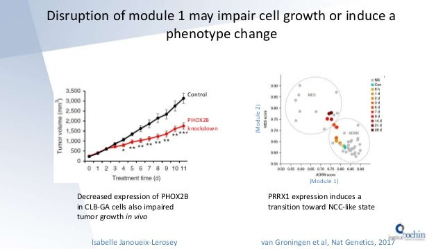 Disruption of module 1 may impair cell growth or induce a phenotype change Decreased expression of PHOX2B in CLB-GA cells ...