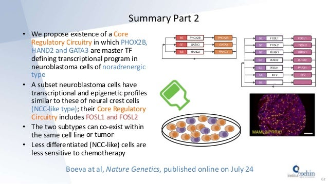 Summary Part 2 • We propose existence of a Core Regulatory Circuitry in which PHOX2B, HAND2 and GATA3 are master TF defini...