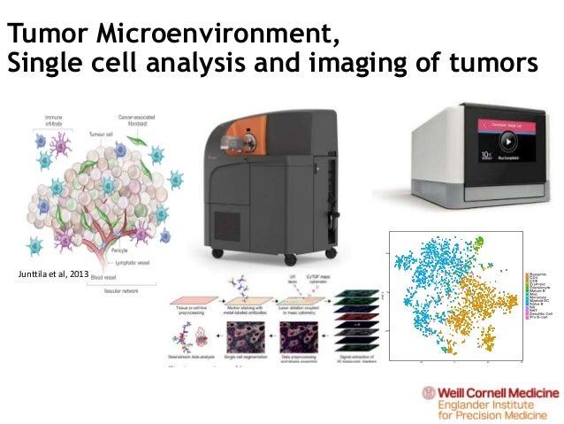Junttila et al, 2013 Tumor Microenvironment, Single cell analysis and imaging of tumors