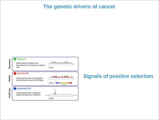 OncodriveFML: Measuring functional impact Impact on NA structure Impact on TFBS Impact on micro NA targets Impact on prote...