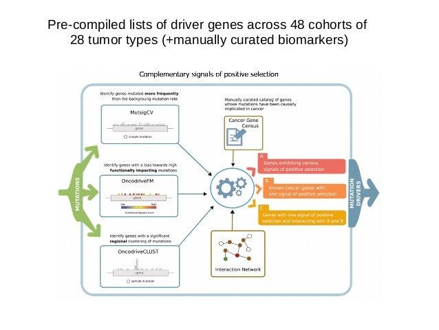 OncodriveFML: Simulates mutations locally following mutational processes Alexandrov et al. Nature 2013