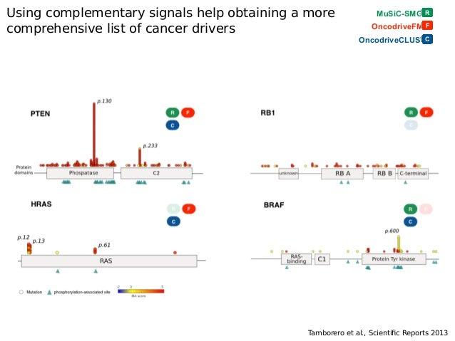 OncodriveFML identifes genes with driver mutations