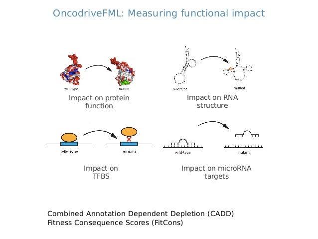 Using OncodriveFML