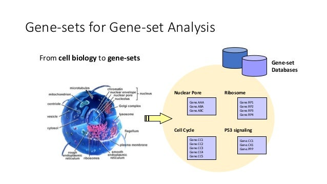 Gene-setAnalysis:Overview Spindle 0.00001 Apoptosis 0.00025 EnrichmentTable FADD TRADD CYTC1 BAX BAXL CASP9 CASP10 …. S...