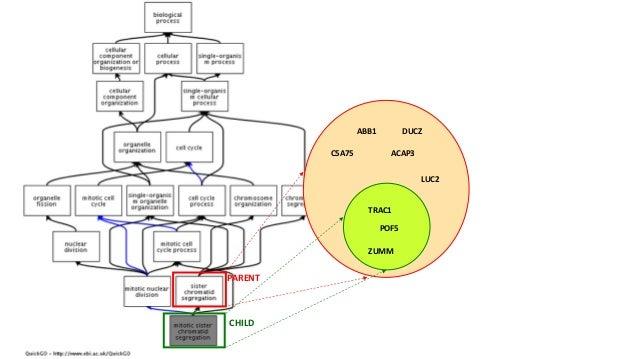 Pathways • Depictmechanisticdetailsofmetabolic,signalingandotherbiologicalprocesses • Canbecomputationallyexpo...