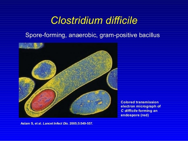 Stool C Difficile Toxin