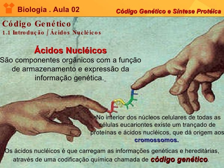 Biologia . Aula 02 Código Genético e Síntese Protéica Código Genético 1.1 Introdução / Ácidos Nucléicos Ácidos Nucléicos S...