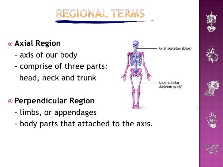 Introduction To Human Anatomy