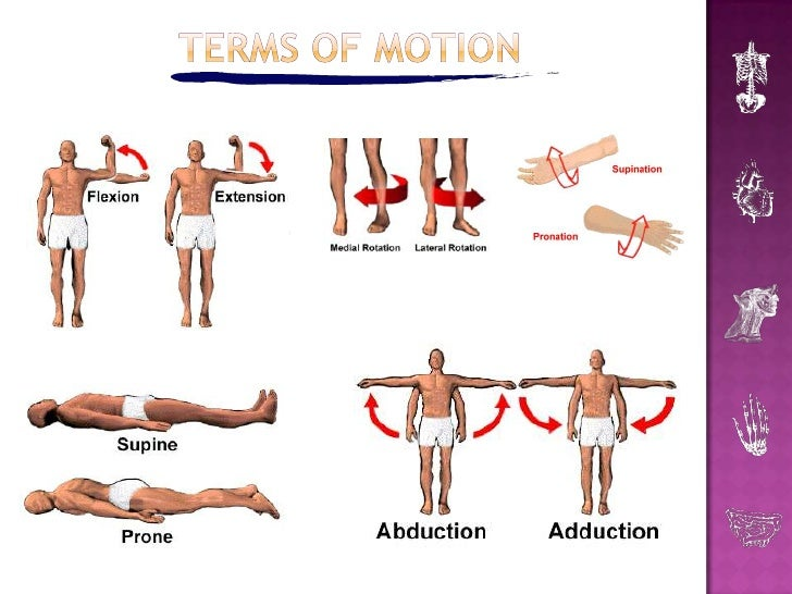 pe body in motion