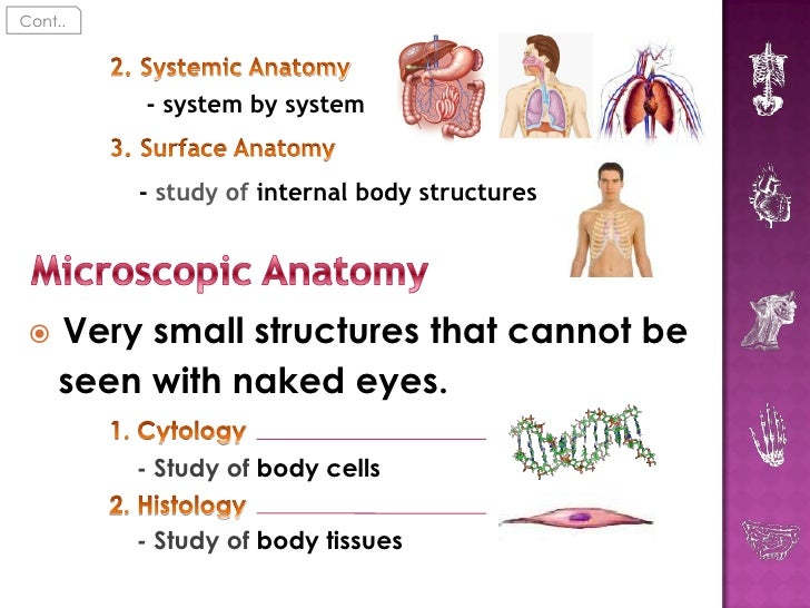 An introduction to the analysis of a human body