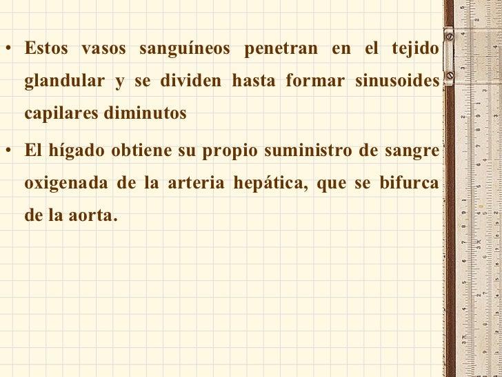 Anatomia: HIgado. pancreas, bazo y vias biliares
