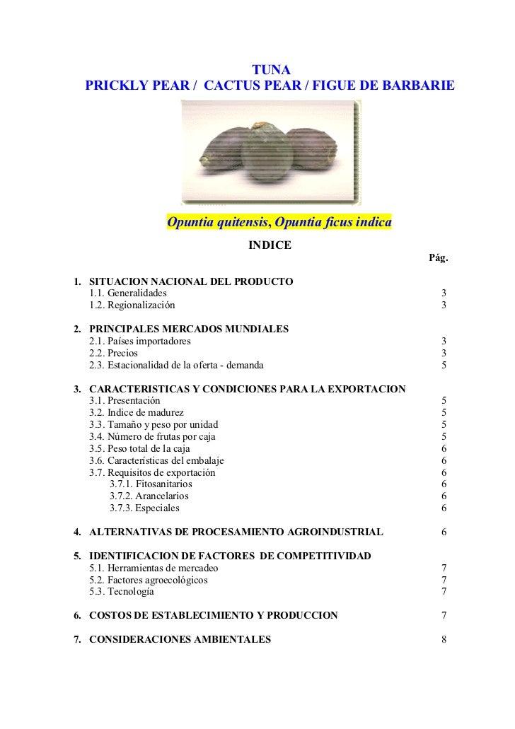 TUNA   PRICKLY PEAR / CACTUS PEAR / FIGUE DE BARBARIE                        Opuntia quitensis, Opuntia ficus indica      ...