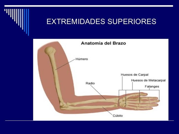 Trabajo esquema del cuerpo humano for Medidas ergonomicas del cuerpo humano