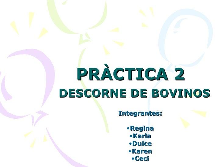 PRÀCTICA 2   DESCORNE DE BOVINOS   <ul><li>Integrantes: </li></ul><ul><li>Regina </li></ul><ul><li>Karla </li></ul><ul><li...