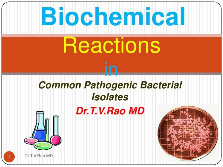 Common Pathogenic Bacterial Isolates<br />Dr.T.V.Rao MD<br />BiochemicalReactions in<br />1<br />Dr.T.V.Rao MD<br />