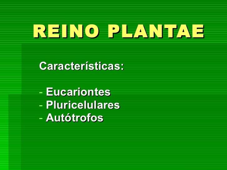 REINO PLANTAE <ul><li>Características: </li></ul><ul><li>Eucariontes </li></ul><ul><li>Pluricelulares </li></ul><ul><li>Au...