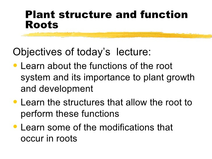 Plant structure and function Roots <ul><li>Objectives of today's  lecture: </li></ul><ul><li>Learn about the functions of ...
