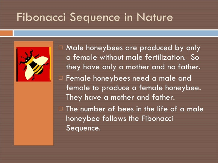a biography of leonardo da pisa commonly known as fibonacci Leonardo of pisa is now known as fibonacci [pronounced fib-on-arch-ee] short for filius bonacci there are a couple of explanations for the meaning of fibonacci : fibonacci is a shortening of the latin filius bonacci, used in the title of his book libar abaci (of which mmore later), which means the son of bonaccio.