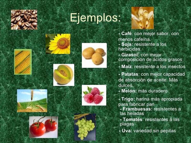 Vegetales transg nicos for Que son plantas ornamentales ejemplos