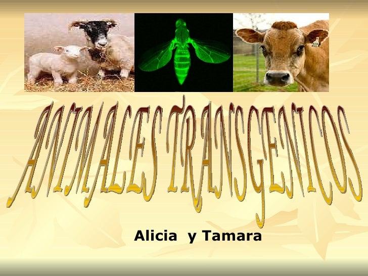 Alicia  y Tamara ANIMALES TRANSGENICOS