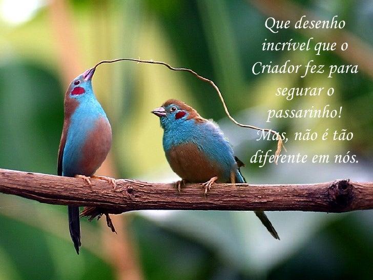 Que desenho incrível que o Criador fez para segurar o passarinho! Mas, não é tão diferente em nós.