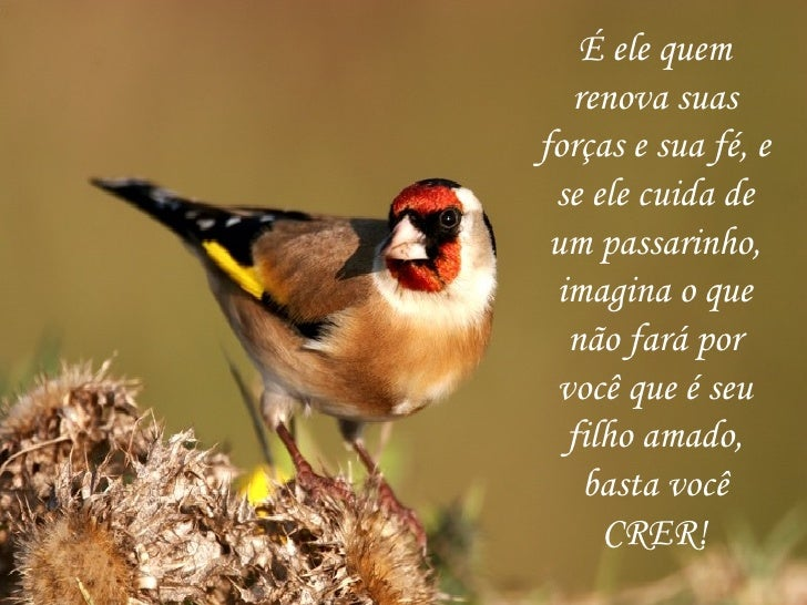 É ele quem renova suas forças e sua fé, e se ele cuida de um passarinho, imagina o que não fará por você que é seu filho a...