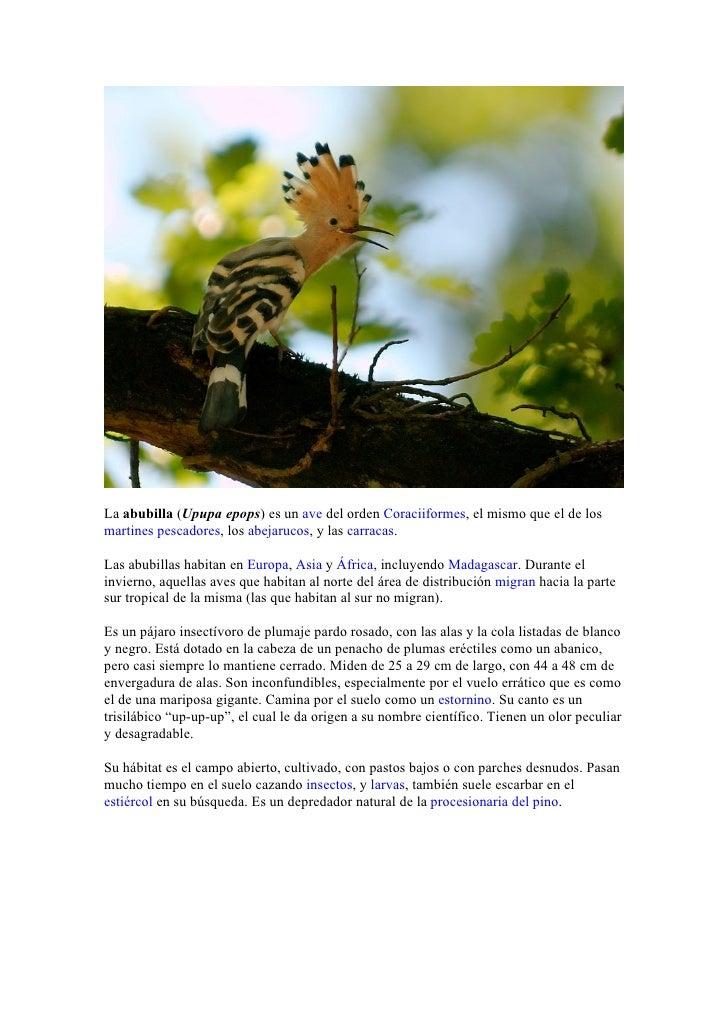 La abubilla (Upupa epops) es un ave del orden Coraciiformes, el mismo que el de los martines pescadores, los abejarucos, y...