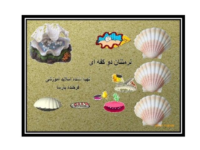 sea  shell  (صدف دریایی)