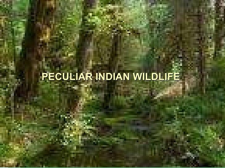 PECULIAR INDIAN WILDLIFE