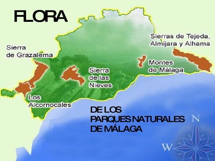 FLORA DE LOS PARQUES NATURALES DE MÁLAGA