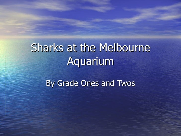 Sharks at the Melbourne Aquarium By Grade Ones and Twos