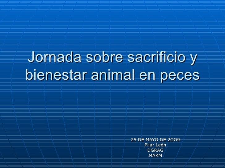 Jornada sobre sacrificio y bienestar animal en peces 25 DE MAYO DE 2OO9 Pilar León DGRAG MARM
