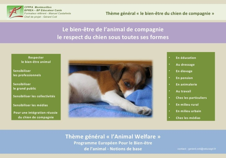 Le bien-être de l'animal de compagnie le respect du chien sous toutes ses formes Thème général «l'Animal Welfare» Progra...