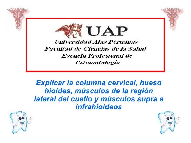 Explicar la columna cervical, hueso hioides, músculos de la región lateral del cuello y músculos supra e infrahioideos