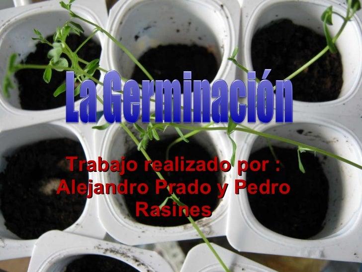 Trabajo realizado por : Alejandro Prado y Pedro Rasines