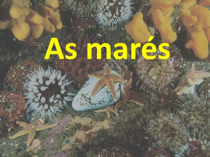 As marés<br />