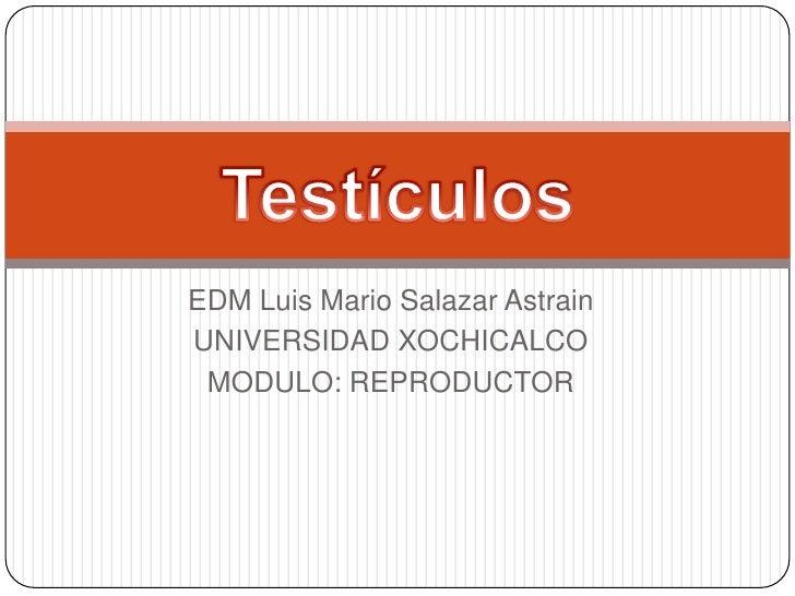 EDM Luis Mario Salazar Astrain<br />UNIVERSIDAD XOCHICALCO<br />MODULO: REPRODUCTOR<br />Testículos<br />
