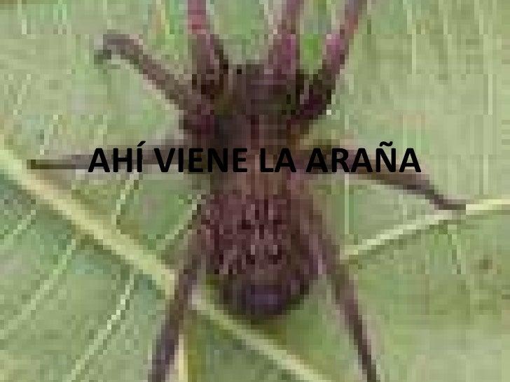 AHÍ VIENE LA ARAÑA
