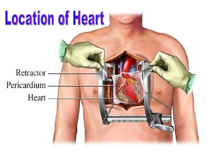 Human heart circulatory system of man includes heartblood and blood vessels 2 location ccuart Choice Image