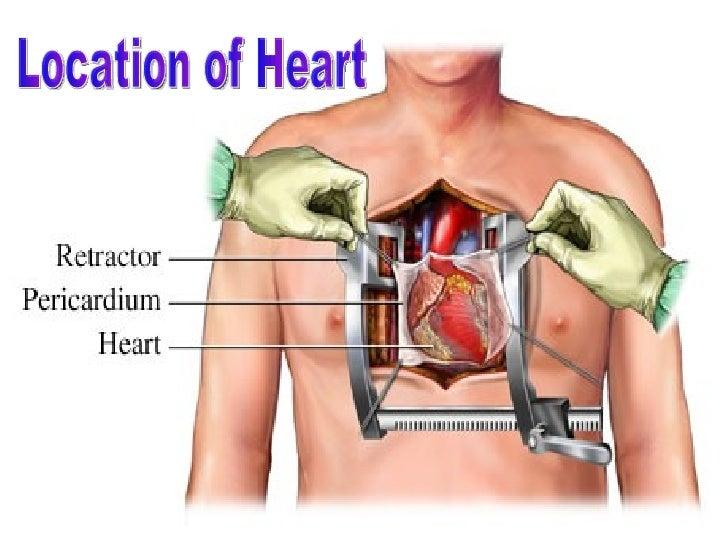 human heart, Human Body