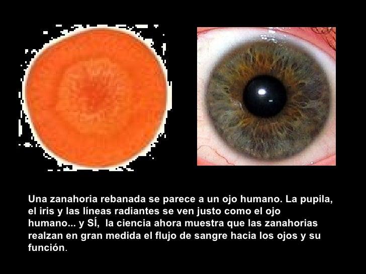 Una zanahoria rebanada se parece a unojo humano. La pupila, el iris y las líneas radiantes se ven justo como el ojo human...