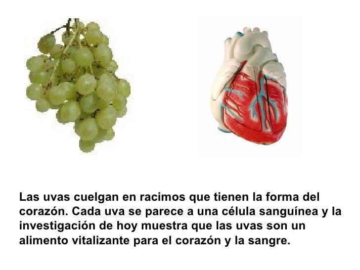 Las uvas cuelgan en racimos que tienen la forma del corazón. Cada uva se parece a una célula sanguínea y la investigación ...