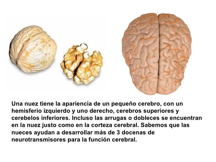 Una nuez tiene la apariencia de un pequeño cerebro, con un hemisferio izquierdo y uno derecho, cerebros superiores y cereb...